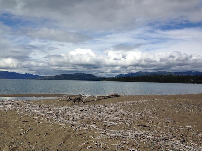 Marsh Lake Yukon