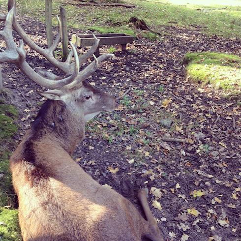Tierpark Hanau