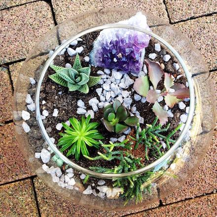 DIY Pflanzen-Terrarium